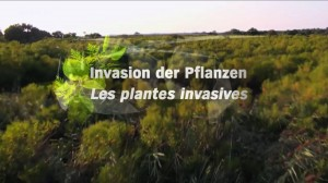 Film Les plantes invasives