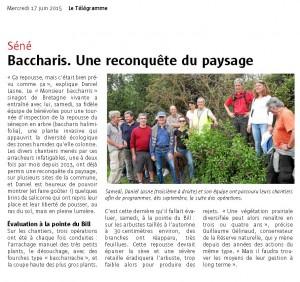2015 06 17 TLGR Baccharis Séné